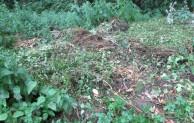Gartenabfälle vernünftig entsorgen