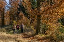<b>Erlebniswanderwoche im Schmallenberger Sauerland</b>