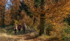 Erlebniswanderwoche im Schmallenberger Sauerland