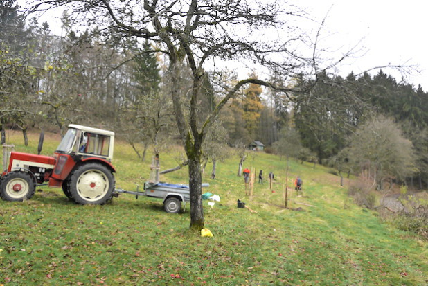 Auch im Herbst ist die Streuobstwiese in Wiederstein ein wunderschöner Ort. Die Aktiven des Heimatvereins sorgen mit Unterstützung von Waldgenossenschaft und Pomologe Theo Morgenschweis dafür, dass dies auch so bleibt (Foto: Gemeinde Neunkirchen).