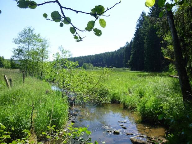 Das Life-Projekt Möhneaue hat das Möhnetal wieder zum sprichwörtlichen grünen Band im Mittelgebirge gemacht (Foto: Franz Reichenberger/FocusFoto).