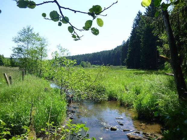 Photo of Möhne näher an Mensch und Natur gerückt