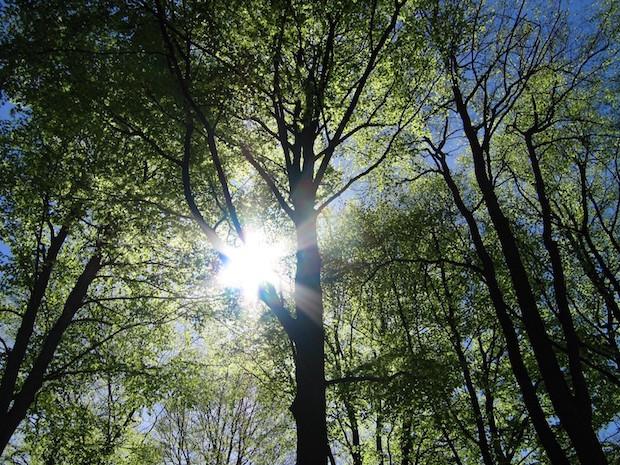 Photo of SGV-Tageskurs: Baumschnitt richtig gemacht