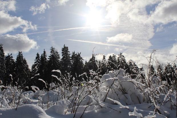Photo of (31) Der Natur einen Besuch abstatten