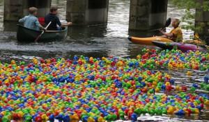 Lippstadt: Das beliebte Entenrennen startet am Sonntag