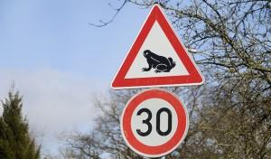 Soest: Im Kreisgebiet hat die Amphibienwanderung begonnen
