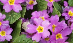 Lippstadt: Frühlingsbepflanzung startet