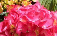 Burbach: Tag der offenen Gartentür am 26. Juni 2016