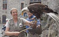 Greifvogel-Flugschau auf der Burg Altena