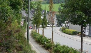 Baumhasser in Schmallenberg unterwegs: Polizei sucht Zeugen
