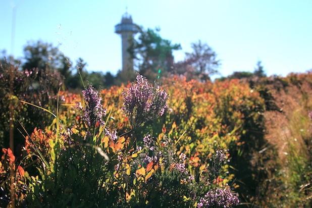 Photo of Exkursion Hochheideblüte in Willingen