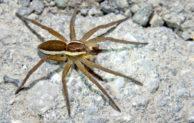 Riesenspinnen am Rothaarsteig: Spannender Nachmittag mit der Biostation