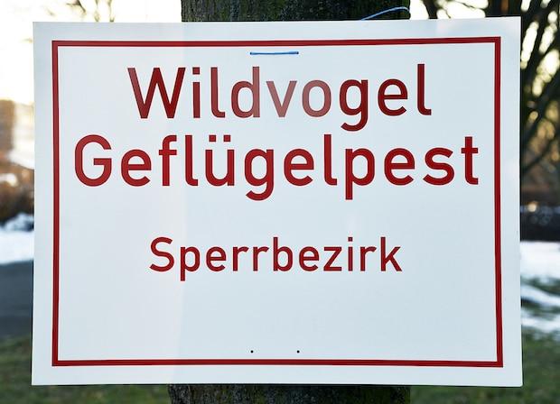 Photo of In Bad Sassendorf entdeckter toter Schwan mit Virus H5N8 infiziert