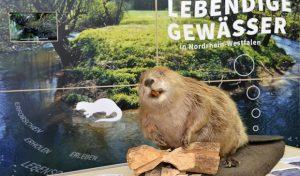 "Wanderausstellung ""Lebendige Gewässer"" im Kreishaus Soest: Eröffnung am Donnerstag, 16. Februar 2017"