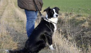 Kreis Soest: Hunde gegen Staupe impfen lassen!