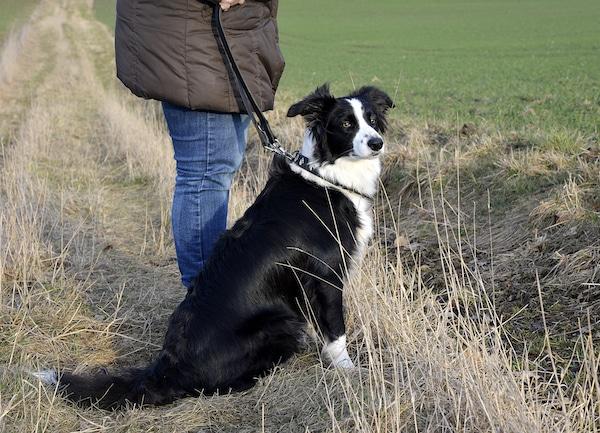 Photo of Kreis Soest: Hunde gegen Staupe impfen lassen!