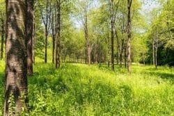 <b>Balve: Aktion saubere Landschaft</b>