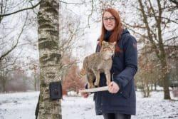 <b>Münster/Plettenberg: Neue Fotos und Videos einer Wildkatze im Märkischen Kreis</b>