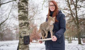 Münster/Plettenberg: Neue Fotos und Videos einer Wildkatze im Märkischen Kreis