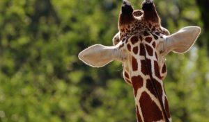 Iserlohn: Osterferienspiele 2017 – Noch Plätze frei bei Fahrt in den Dortmunder Zoo
