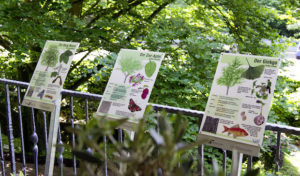 Continue-Waldprojekt: Sommer-Wanderung und Baum-Lehrpfad am Seilersee