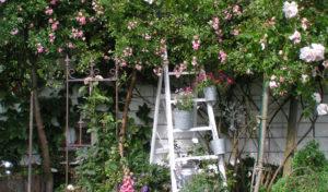 Soest – Zehn Privatgärten laden zum Verweilen und Lustwandeln ein