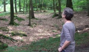 Arnsberg – Veranstaltung der Waldakademie Vosswinkel e. V. im WILDWALD Vosswinkel