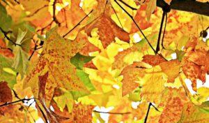 Herbstferienspiele in Iserlohn – Anmeldestart am 9. Oktober