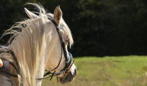 Bezirksregierung Arnsberg: Reiterinnen und Reiter dürfen mehr Wege nutzen