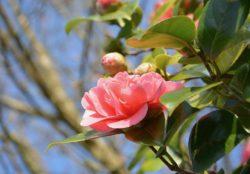 Netphen: Baum- und Strauchschnittsammlung im Frühjahr 2018