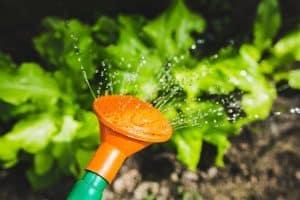 Photo of Mit einem Bewässerungssystem für den Garten kann der Sommer kommen