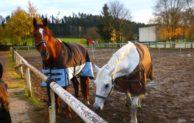 städtischen Kita Abenteuerland bietet Kurs Rund ums Pferd an