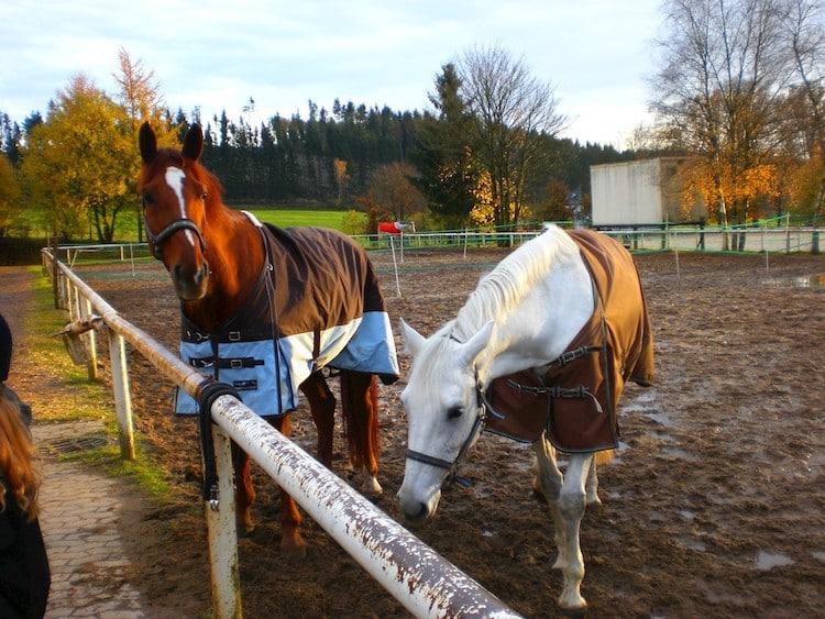 Photo of städtischen Kita Abenteuerland bietet Kurs Rund ums Pferd an