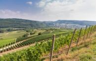 Das Marktgräfler Land – Die Toskana Deutschlands