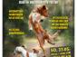 Mein Hund – 1. Hundehalter-Tages-Forum im Siegerland