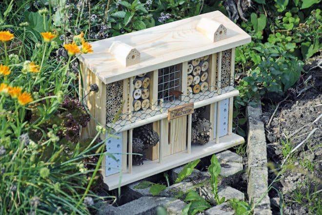 Photo of So fühlen sich Bienen und Schmetterlinge wie zu Hause