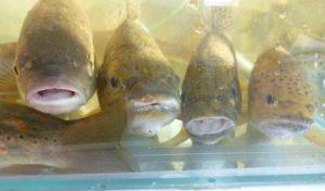"""""""Reich´ mir die Flosse, Genosse"""": Kinder lernen Fische"""