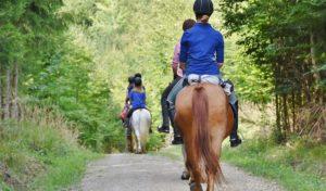 Reiten auf Siegens Waldwegen weiter verboten