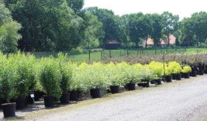 Umweltschutz – Pflanzen für mehr Schönheit