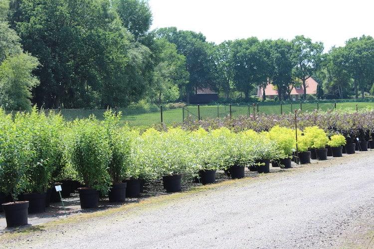 Photo of Umweltschutz – Pflanzen für mehr Schönheit