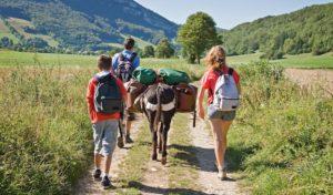 Fledermäuse, Brückenwanderung, Märchen-Tour und mehr