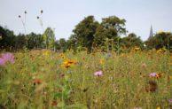 Bunte Blumenwiesen für Bienen, Schmetterlinge & Co.