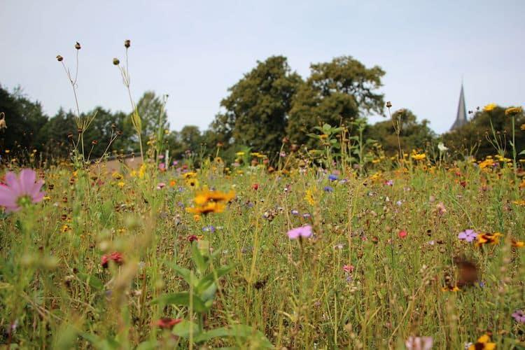 Photo of Bunte Blumenwiesen für Bienen, Schmetterlinge & Co.