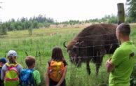 Aufregendes Abenteuer mit Tieren und in der Natur