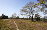 Natur-Schutzprojekt Bergheiden im Rothaargebirge zieht Zwischenbilanz