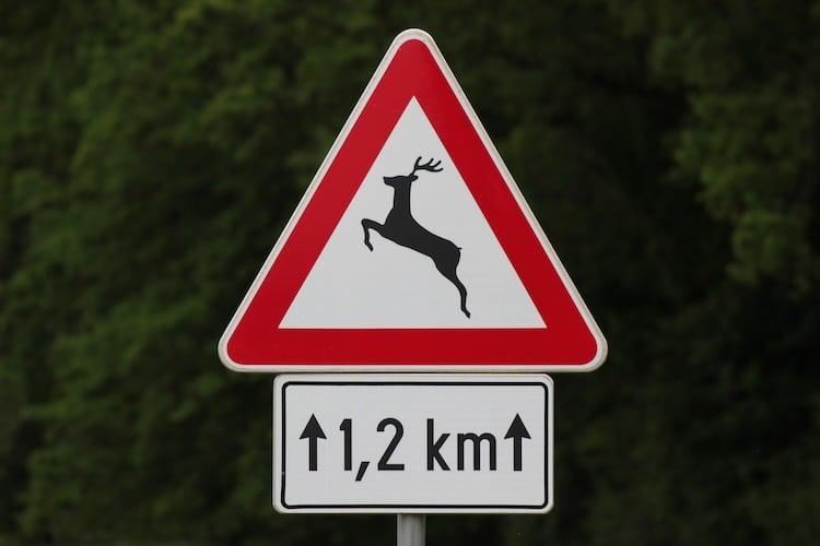 Photo of Wildunfall vorgetäuscht