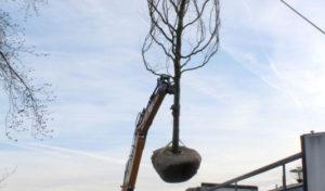 Baum an Freitreppe an der Ruhr