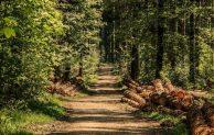 Wald und Forst – Infos im Rathaus