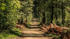 2020-02-18-Wald