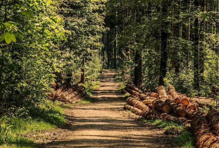 Photo of Wald und Forst – Infos im Rathaus